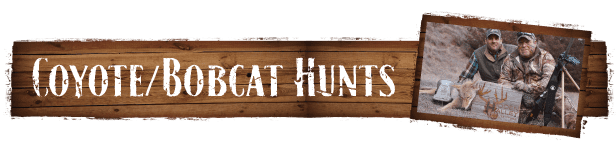 coyote-bobcat-hunts-trans