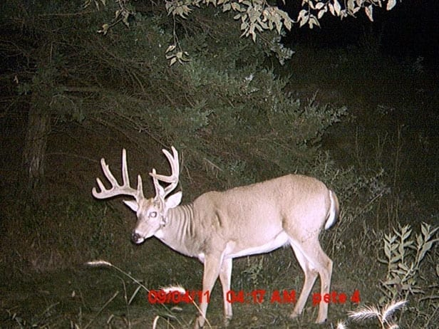 trail cam photo 2 of whitetail trophy buck with non-typical drop tyne